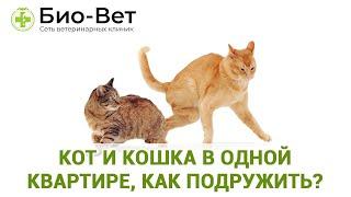Кот и кошка в одной квартире, как подружить?