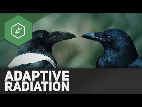Adaptive Radiation - Evolutionsfaktoren 7 ● Gehe auf SIMPLECLUB.DE/GO & werde #EinserSchüler