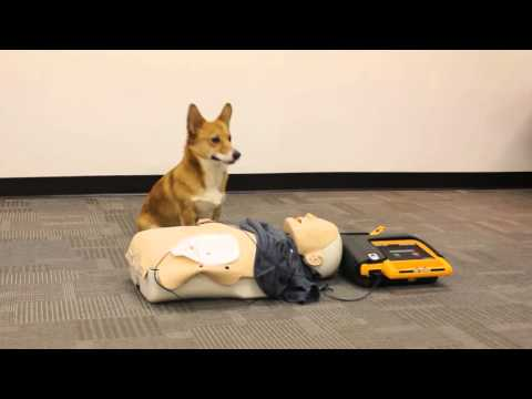 how to give a dog cpr video