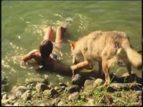 L'altruisme chez les loups Image 1