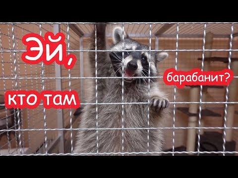VLOG Кигуруми Кати. Новое увлечение Насти