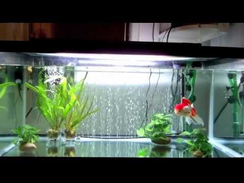 Goldfish Care: The Nitrogen Cycle