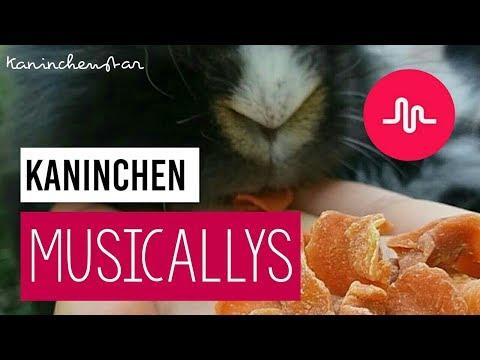 Musicallys (Tik Tok) von den Kaninchen #3 🎶🐇 | Kaninchenstar