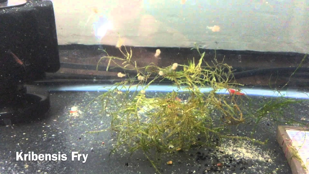 10 Easiest Fish To Breed Care For Youtube