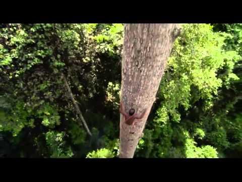 Trees - Words by Hermann Hesse