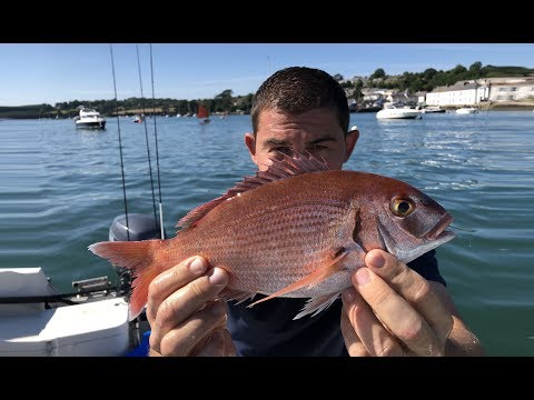 Sea Fishing For Bream - Boat Fishing Cornwall