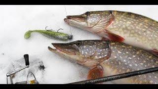 В поисках Щуки и Судака зимой Рыбалка на хищника