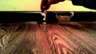 Коты воители 1 серия Сила трёх