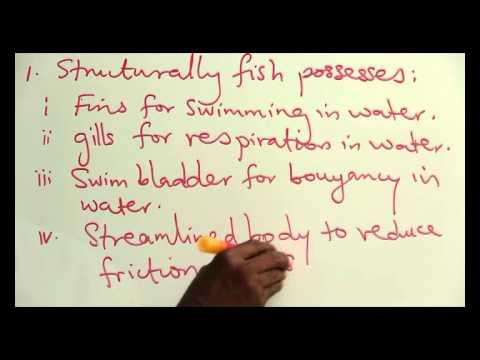 ADAPTATION OF FISH TO AQUATIC LIFE PART 1