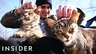 Meet The Man Who's Turned His Home Into A Sanctuary For Over 300 Cats