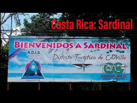 Sardinal in Costa Rica (Guanacaste)