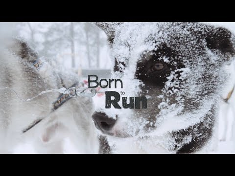 Born to Run – a Slow Film about BIRK Husky, Norway