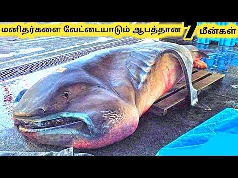 வெறித்தனமான மீன்கள்    Seven Amazing Ocean Creatures Part 2    Tamil Galatta News