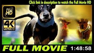 Watch Wiener Dog Nationals 2013  Full Movie Online