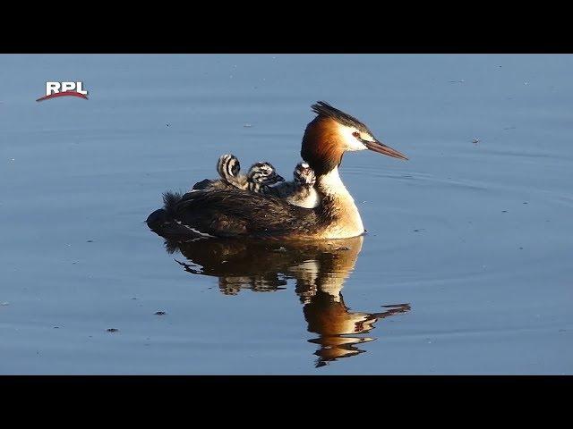 Natuur in de omgeving: Veilig op moeders rug