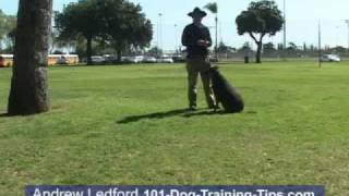 Dog Training In Orange County And Los Angeles