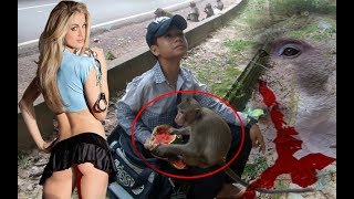 Top 10 Monkey Videos - Amazing Top 10 Monkey Videos
