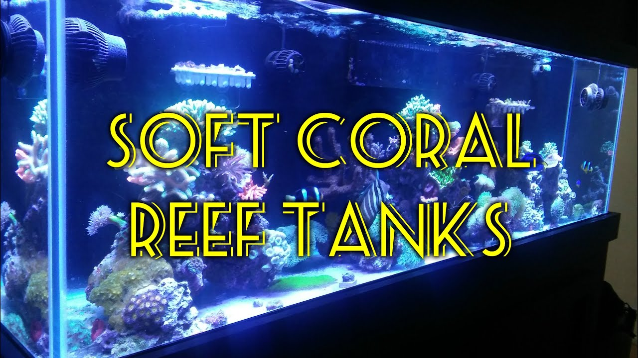 Soft coral tank beginner guide to saltwater aquariums for Best saltwater fish for beginners