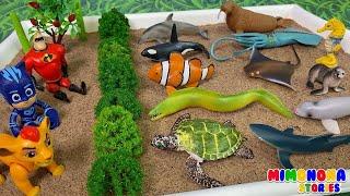 Nombres de Animales del Oceano Mar Rio 🐠🐢 Anguila Pez Orca Tortuga ✨ Mimonona Stories