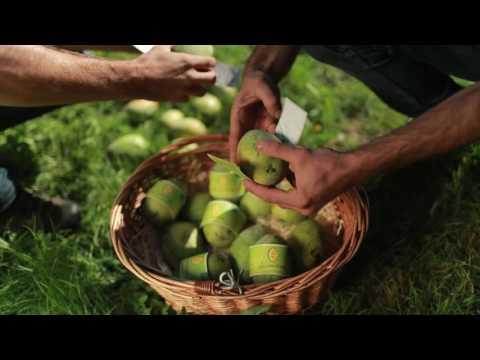 Simon & Simon: Asiminaanbau in Südtirol