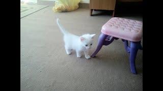 Белый котенок .Новый жилец