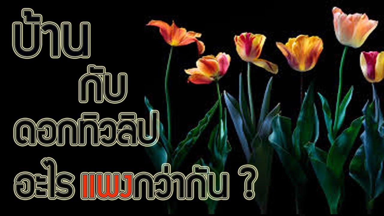 ความลับของดอกทิวลิป (ลงใหม่)