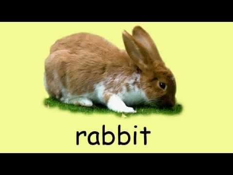 English vocabulary - Animals 1