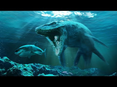 7 Enemigos Reales Del Megalodon Que Seguramente No Conocías