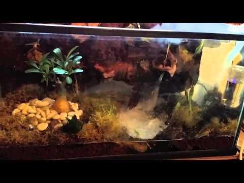 Tiger Salamander Vivarium Build