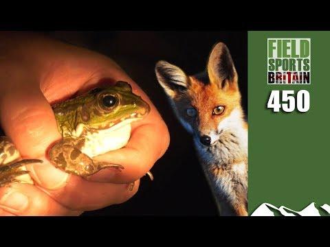 Fieldsports Britain - Foxing among Frogs