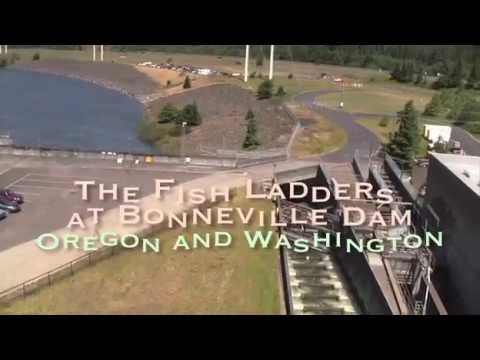 The fish ladders at bonneville dam youtube for Fish count bonneville