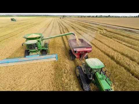 Rice Harvest Arkansas