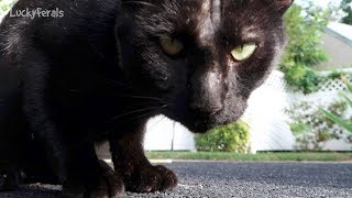 Boo Day 6 - Training And Socializing A Feral Cat - Toys And Treats thumbnail