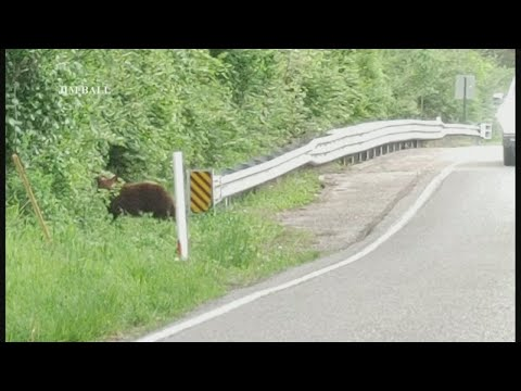 More-black-bear-sightings-reported-in-the-St.-Louis-region