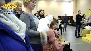 Международная Выставка кошек, Харьков, 04032018, Слайд show