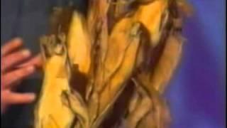 Der Urzeit-Code 1/2 - Genmanipulation Elektrofelder (17.12.1988 Schweiz)