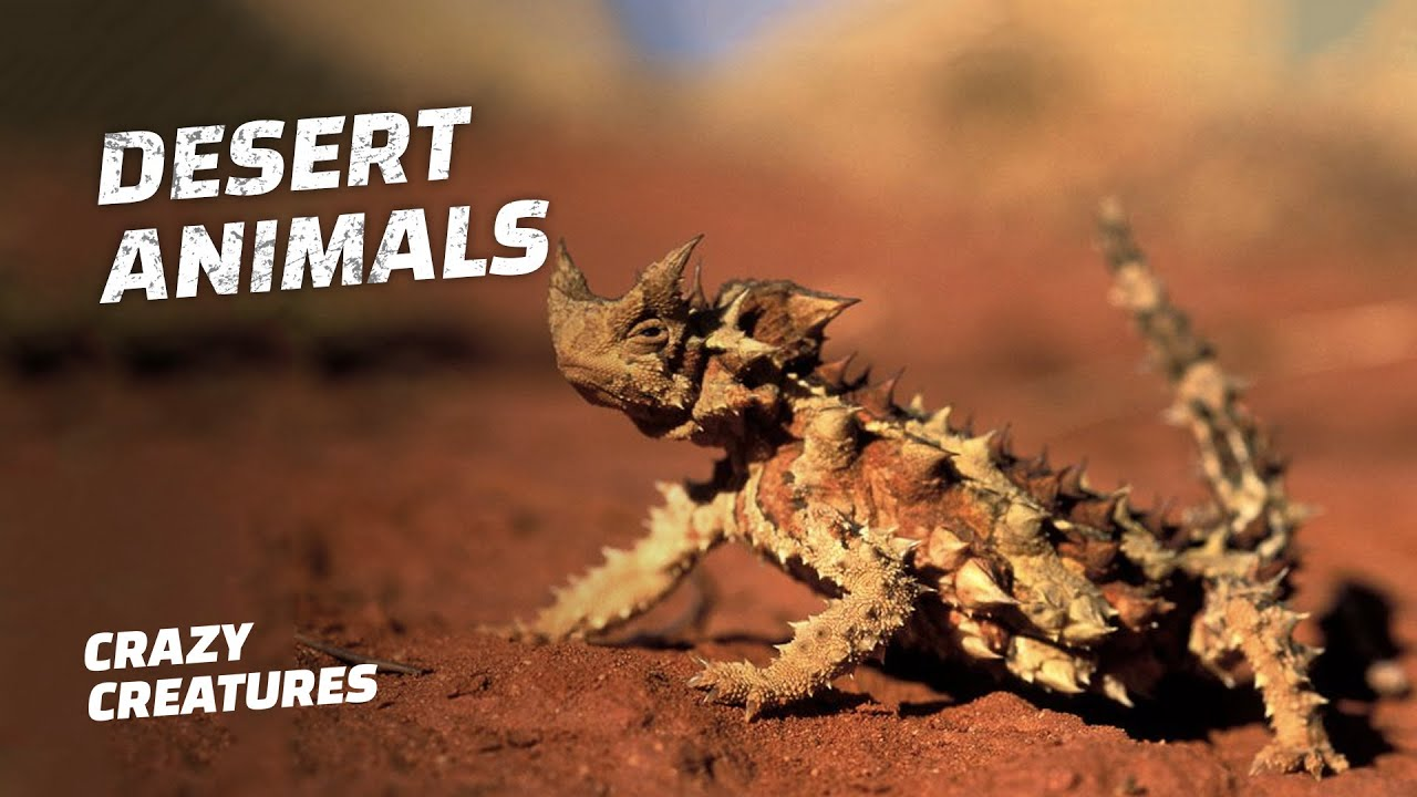 Amazing Animals That Have Adapted to Living in the Desert