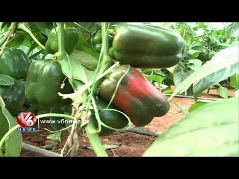 KCR Farm House || Doing Wonders In Agriculture Sector || V6 News
