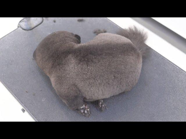 겨울잠 자러 오신 흑곰. (누르면 일어납니다)