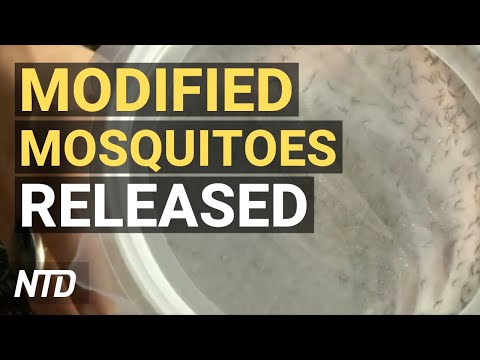 Texas Moves Toward Permit-Free Gun Carrying; First Genetically Modified Mosquitoes Released in US