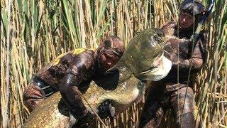 """Самые Большие Рыбы """" ВСТРЕЧА с ГИГАНТАМИ """".Огромный Сом 89кг! Подводная охота 2019."""
