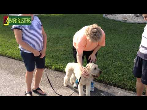 Soft Coated Wheaten Terrier - Dog Training of Fort Myers K9- Patrick Logue