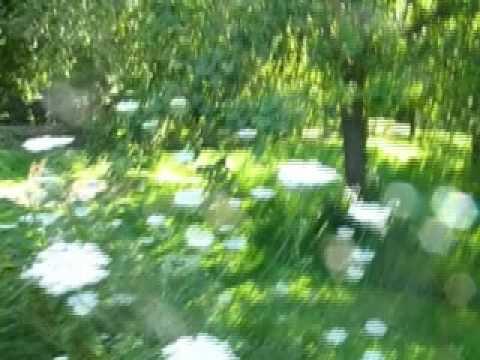 Glastonbury abbey  orchard in Summer