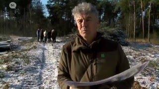 video uit Door de vele bossen in Hamont-Achel zijn er heel wat vleermuizen, de meeste leven in holle bomen. Maar die bomen beginnen oud te worden, te oud zelfs en dreigen om te vallen. Agentschap Natuur en Bos en regionaal Landschap Lage Kempen vervangt nu systematisch een deel van de bomen. Zo kunnen de vleermuizen ook de volgende honderd jaar in de bossen blijven.