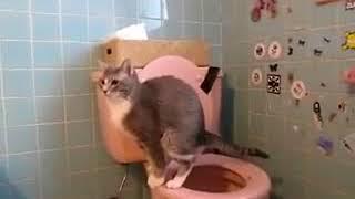 кошки пукают  Смотри какой прикол