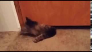 Для тех, кто всё ещё сомневается, что коты - это жидкость.