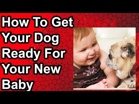 how-to-get-your-dog-ready-for-your-new-baby