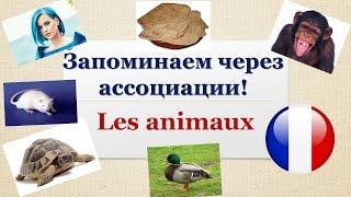 Урок#113: Как легко запоминать французские слова? Животные - les animaux