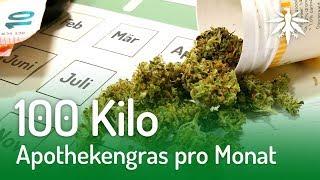 100 Kilo Apothekengras pro Monat   DHV-News #174