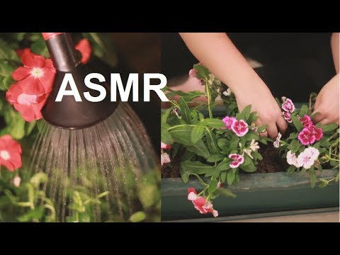 ASMR Planting Flowers & Herbs | Dry Soil & Water Sounds | Wa